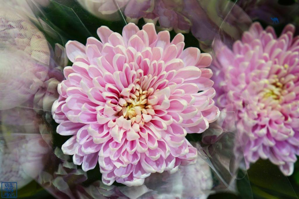 Le Chameau Bleu - Blog Voyage Taiwan Taipei - Fleur du Marché aux fleurs de Taipei Taiwan