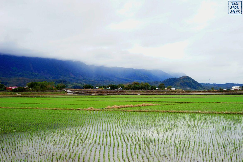 Le Chameau Bleu - Blog Voyage Taiwan - Riziere dans la brume -Vacances à Taiwan - Chihshang