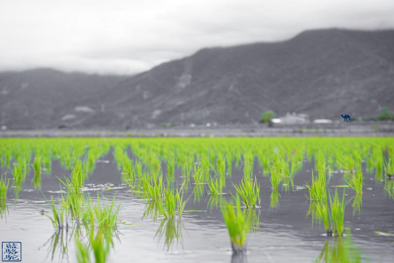 Le Chameau Bleu - Blog Voyage Taiwan - Shichang vu des rizieres - Voyage vélo à Taiwan