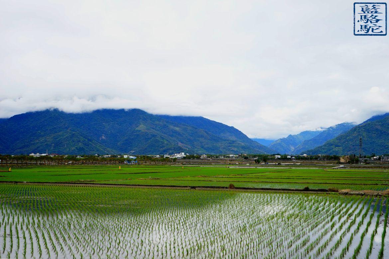 Le Chameau Bleu - Blog Voyage Taiwan - Rizière