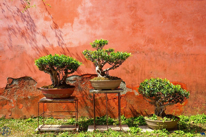 Le Chameau Bleu - Blog Voyage Tainan Taiwan - Bonsai du temple de Confucius