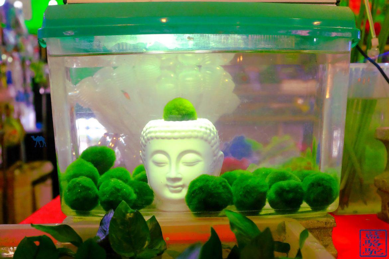 Le Chameau Bleu - Blog Voyage Taiwan - Boudha dans l'eau au marché au fleur de Taipei - Taiwan