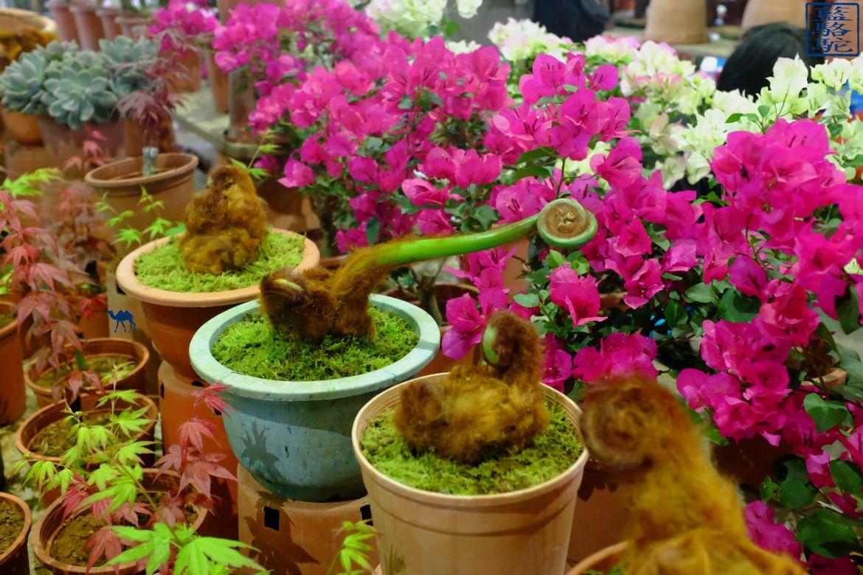 Le Chameau Bleu - Blog Voyage Taiwan Taipei - Curiosité du marché au fleur de Taipei - Taiwan