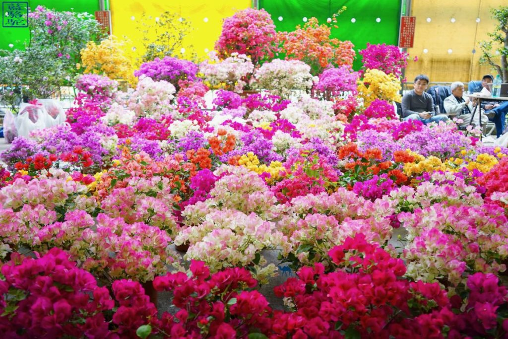 Le Chameau Bleu - Blog Voyage Tapei Taiwan - Stand du marché au fleur de Taipei - Voyage Taiwan