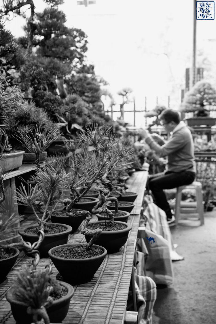 Le Chameau Bleu - Blog Voyage et Cuisine - Voyage à Taiwan - Bonsai du marché aux fleur de Taipei