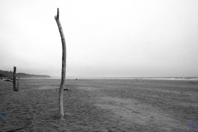 LE Chameau Bleu - Blog Voyage Tofino Canada - Plage de Tofino sur le Pacific Rim - Long Beach