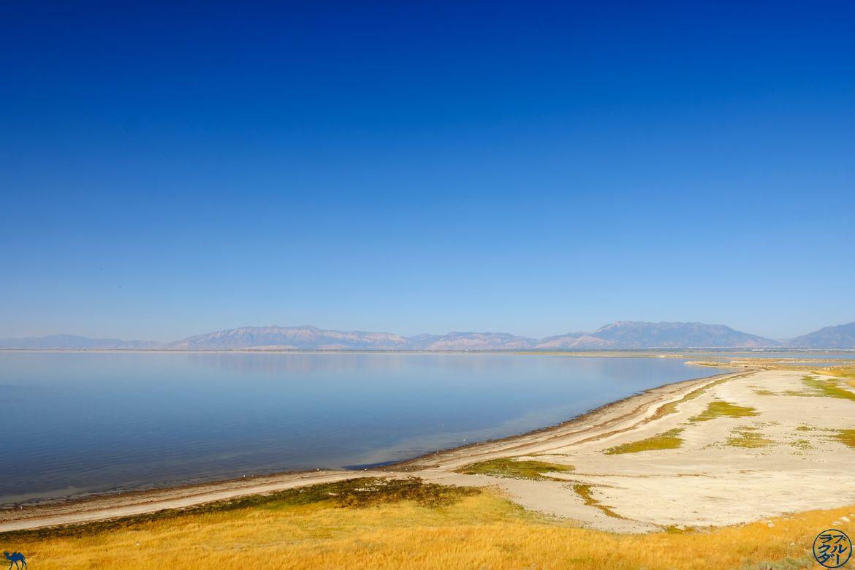 Le Chameau Bleu - Blog Voyage Utah - Antelope Island sur les berges de Salt Lake City