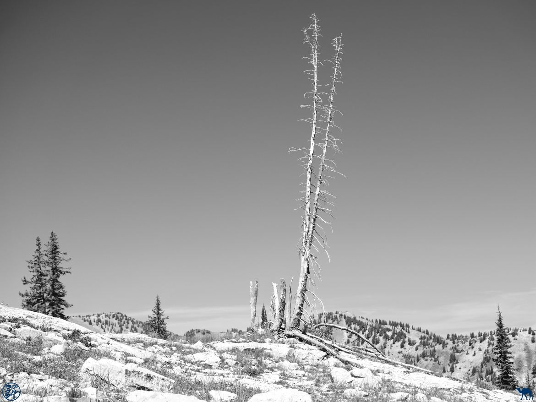 Le Chameau Bleu - Blog Voyage Utah USA - Paysage de Cecret Lake