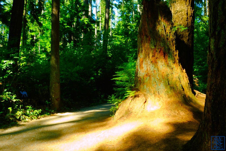 Le Chameau Bleu - Blog Voyage Vancouver Canada -Forêt de Stanley Park - Vancouver