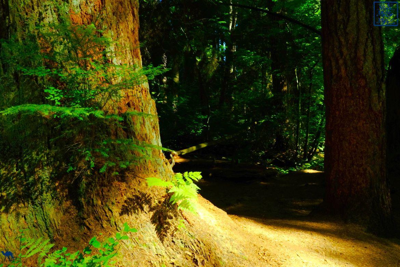 Le Chameau Bleu - Blog Voyage Vancouver Canada -Foret de Stanley Park