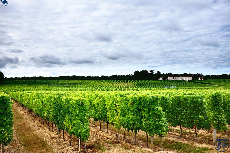 Le Chameau Bleu - Blog Voyage Vélo sur Le Canal des deux mers - Balade dans les vignes de Gironde