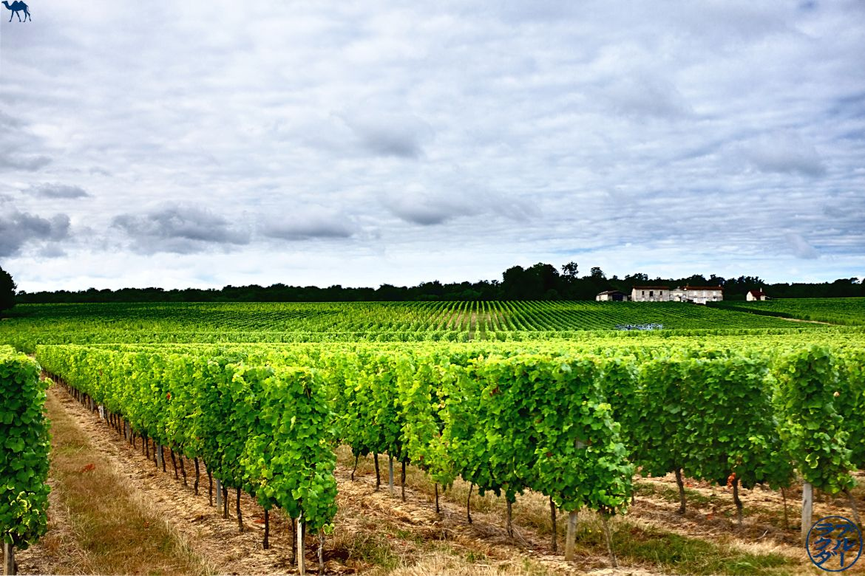 The Blue Camel - Bloc de viatge en bicicleta de viatge Canal dels dos mars: camineu en les vinyes de Gironde