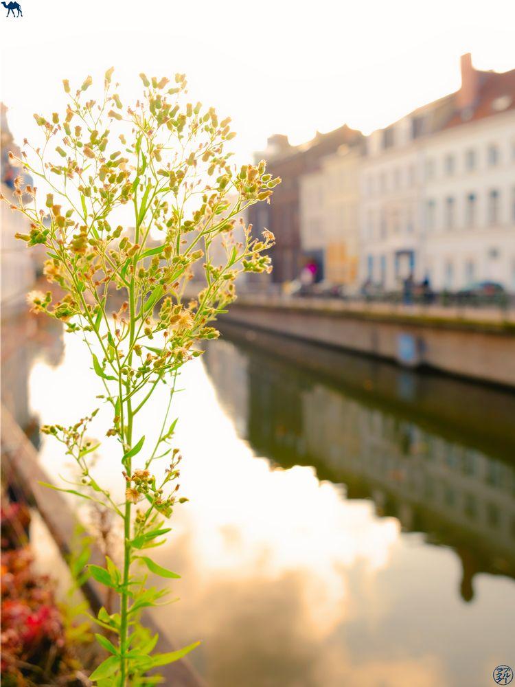 Le Chameau Bleu - Blog Week End à Gand - Fleur et Canaux